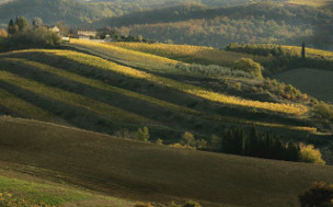 Chianti Afternoon Guided Tour - Chianti Tour - Florence Museum